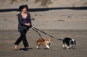 Woman runs two Pembroke Welsh Corgi dogs on Morro Strand State B