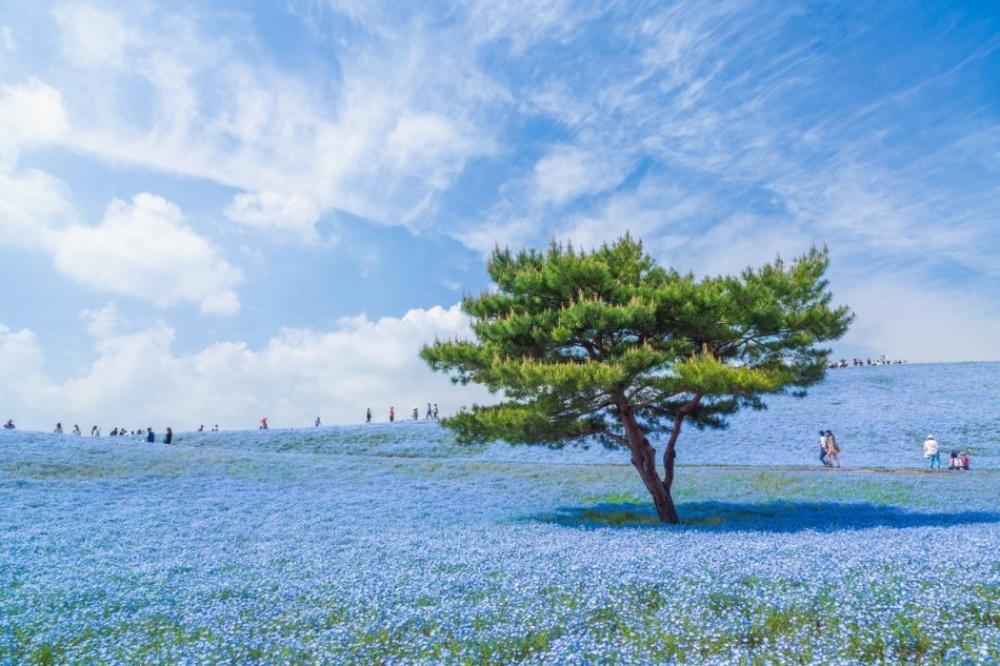 Naturaleza azulada en Japón.