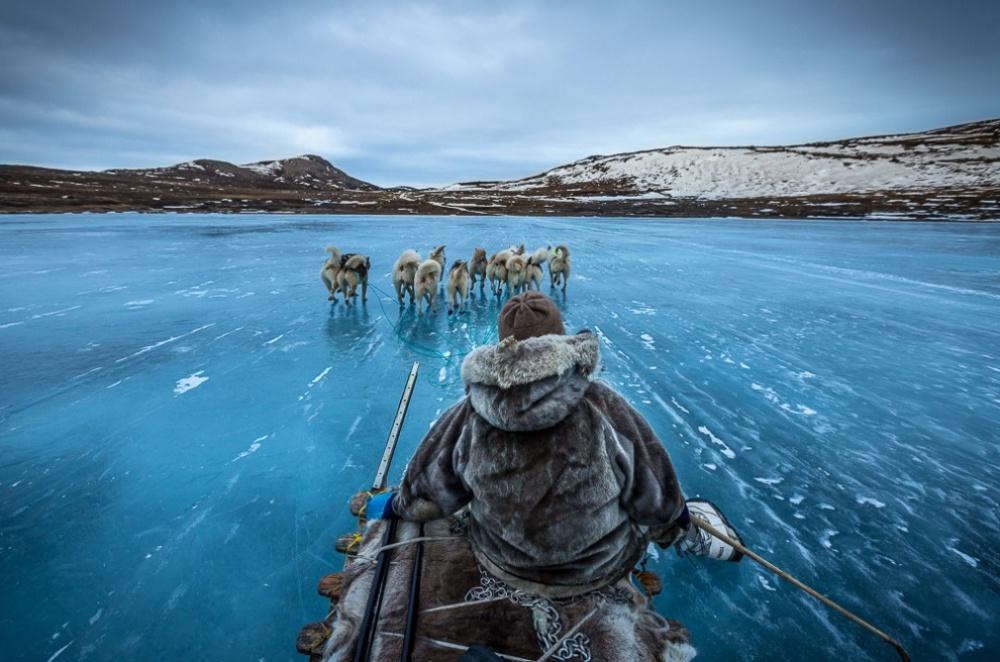 Perros de carga en Groenlandia.
