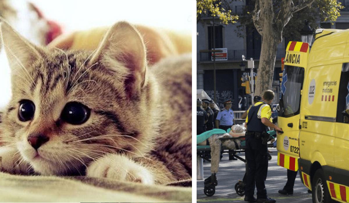 gatitos en twitter tras ataque barcelona