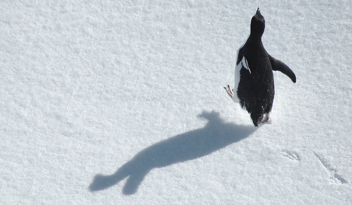 Pingüino Feliz